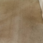 Rug Doctor Carpet Cleaning