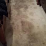 dirtiest carpet in friendswood tx
