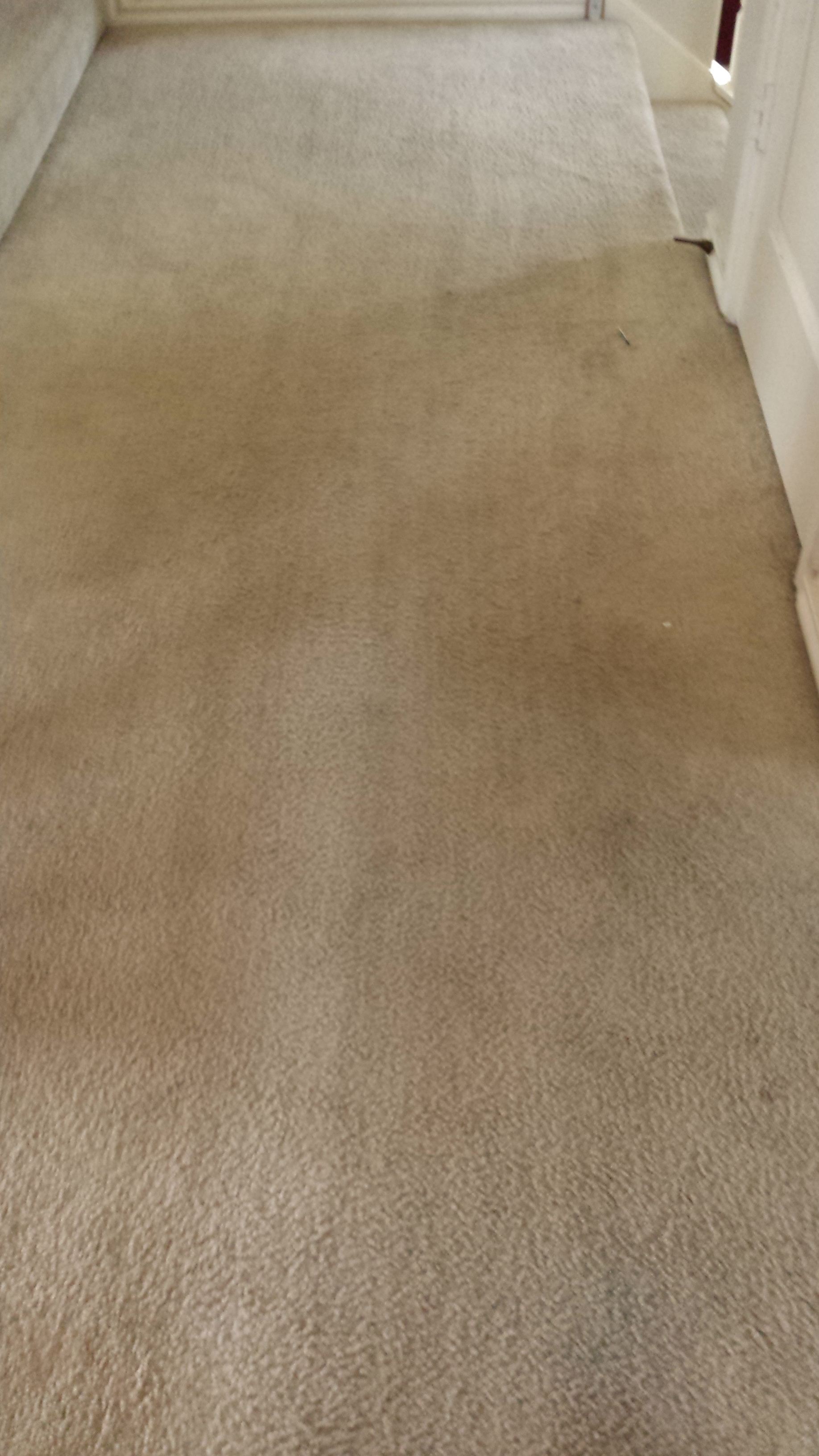 Carpet Cleaning Archives Page 2 of 3